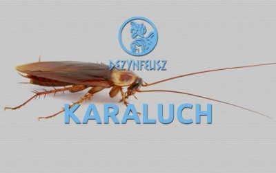 Karaluchy