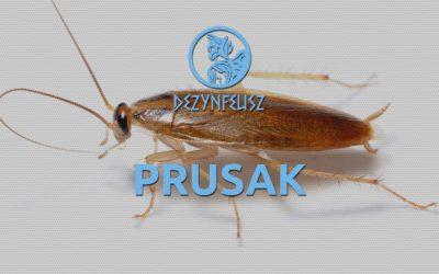 Prusaki