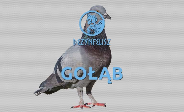 golab