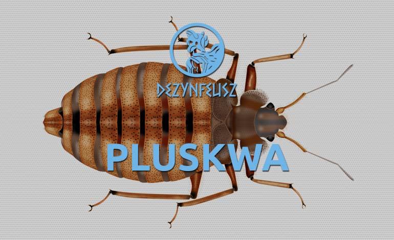 pluskwa